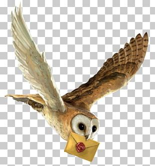 Harry Potter And The Philosopher's Stone Owl Hedwig Hogwarts PNG