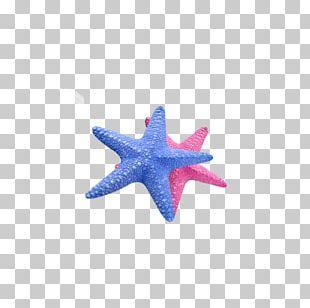 Starfish Callopatiria Granifera Icon PNG