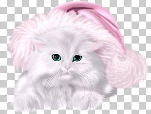 Kitten Whiskers Cat Christmas PNG