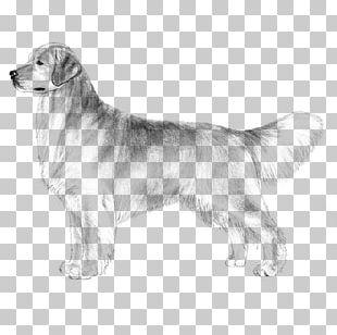 The Golden Retriever Labrador Retriever Puppy Dog Breed PNG