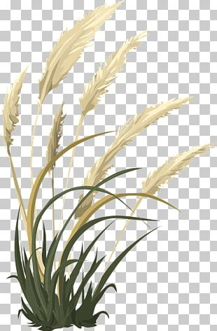 Grasses Pampas Grass Ornamental Grass Funeral Home PNG