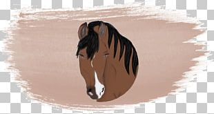 Photography Horse Watercolor Painting Art PNG