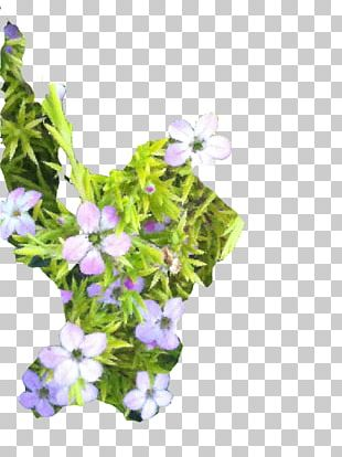Annual Plant PNG