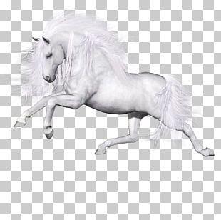 Ferghana Horse Unicorn Pegasus PNG