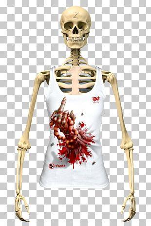 Human Skeleton The Skeletal System Human Body Vertebral Column PNG