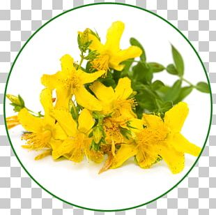 Perforate St John's-wort Herb Extract Dietary Supplement Stock Photography PNG