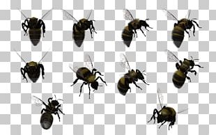 Honey Bee Insect Bumblebee Swarming PNG