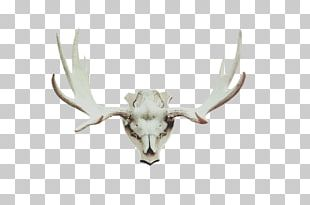 Red Deer Moose Antler Horn PNG