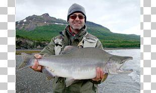 Coho Salmon Recreational Fishing Chum Salmon Sockeye Salmon Atlantic Salmon PNG