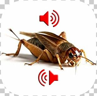 Live Food Reptile Cricket Mealworm Locust PNG