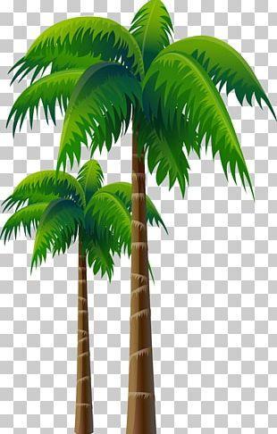 Arecaceae Coconut Tree Woody Plant PNG