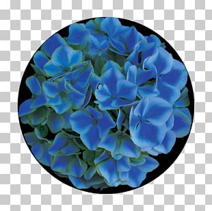 Hydrangea Glass Rose Family Gobo Petal PNG