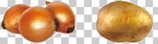 Potato Onion Vegetable PNG