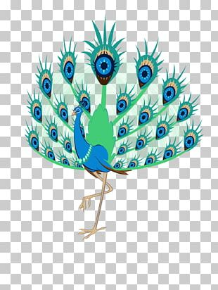 Bird Feather Peafowl Cartoon Comics PNG