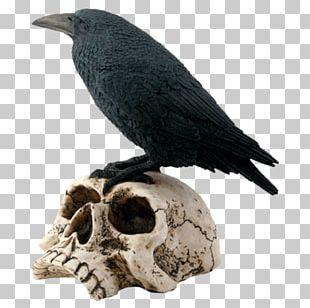 The Raven Bird Human Skull Symbolism Skeleton PNG