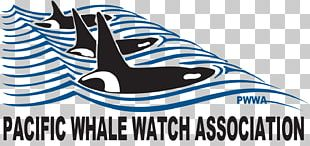 Whale Watching Killer Whale Puget Sound PNG