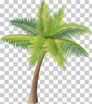 Coconut Icon PNG