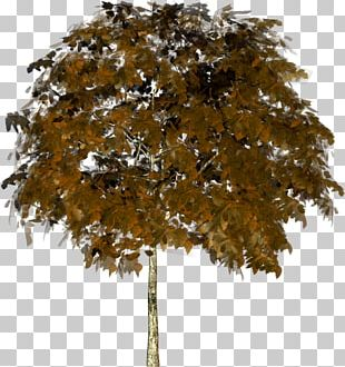 Plane Trees Trunk Geometry PNG