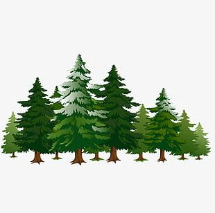 A Row Of Pine Trees PNG