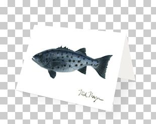 Fin Fish PNG
