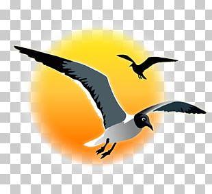 Bird Migration Fauna Water Bird Beak PNG