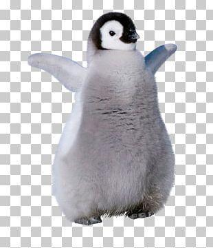 King Penguin Stuffed Animals & Cuddly Toys Beak PNG