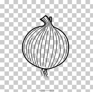 Drawing Onion Coloring Book PNG