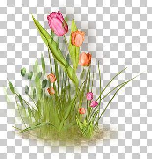 Floral Design Tulip Flower Painting PNG