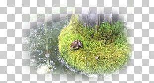 Frog Water Nervous System Holism Human Body PNG