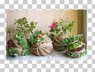 Floral Design Flowerpot Succulent Plant Garden Kokedama PNG