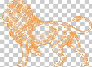 Lionhead Rabbit Black And White White Lion PNG