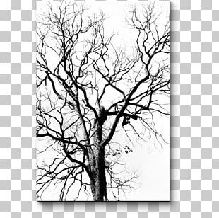 Stock Photography Drawing Tree Leaf PNG