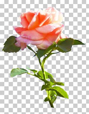 Rose Pink Flower Leaf PNG
