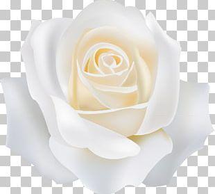 Garden Roses White PNG