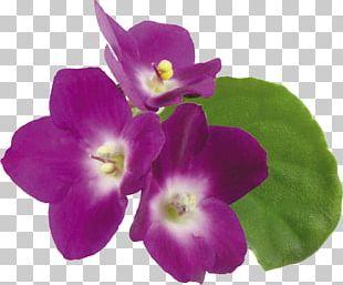 Violet Flower PNG