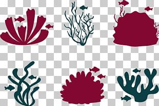 Coral Reef Fish Euclidean PNG