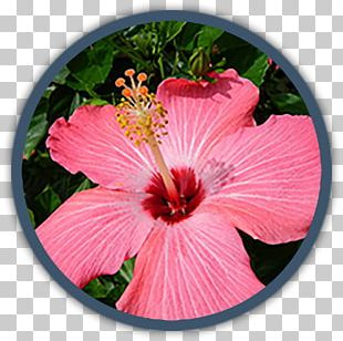 Tropical Climate Tropics Tropical Garden Flower PNG