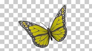 Monarch Butterfly Brush-footed Butterflies Pieridae Narrowleaf Milkweed PNG