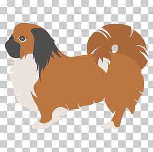 Dog Breed Pekingese Bichon Frise Puppy Shih Tzu PNG