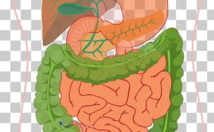 Human Digestive System Diagram Digestion Gastrointestinal Tract Human Body PNG