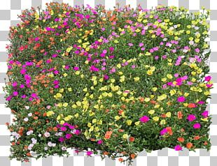 Flower Texture Mapping PNG