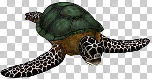 Loggerhead Sea Turtle Cheloniidae Hawksbill Sea Turtle Tortoise PNG