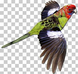 Bird Parrot Crimson Rosella Budgerigar Zoo Tycoon 2 PNG