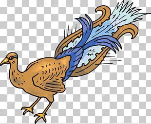Chicken Feather Bird Peafowl PNG
