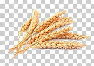 Wheat Straw Cereal PNG