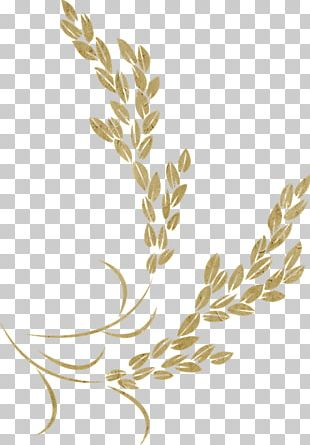 Golden Rice Icon PNG