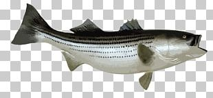 Striped Bass Fishing Bony Fishes PNG