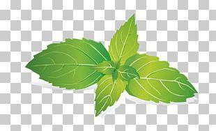 Leaf Mint Raster Graphics PNG
