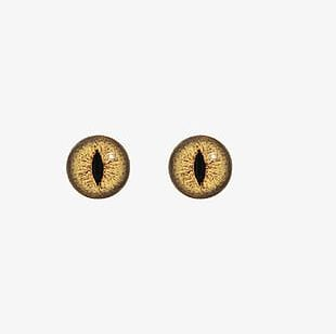 Animal Eyes PNG