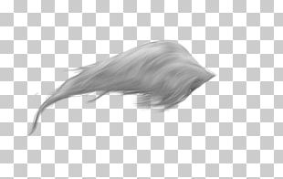 Horse Tail Feather PNG